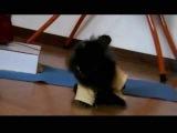 Rabbit Agility (Eddie)