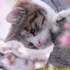 Коты-Воители: Солнечный луч. Официальная группа.