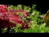 Плотоядные растения. Секреты адаптаций