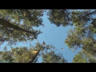 «Полёт бабочки» (Документальный, 2012)