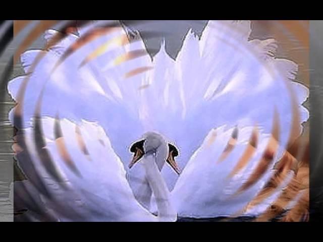 Мой ролик Моя любовь, как лебедь белая!