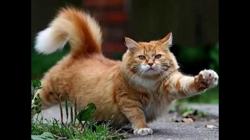 Мифы и правда о кастрации котов