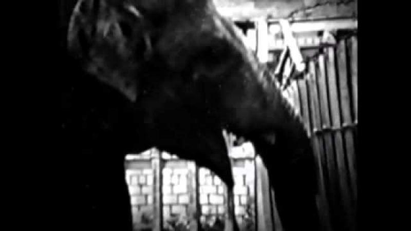 выпуск 124 Говорящий слон