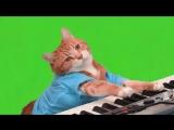 Make Your Own Keyboard Cat - [Green Screen]