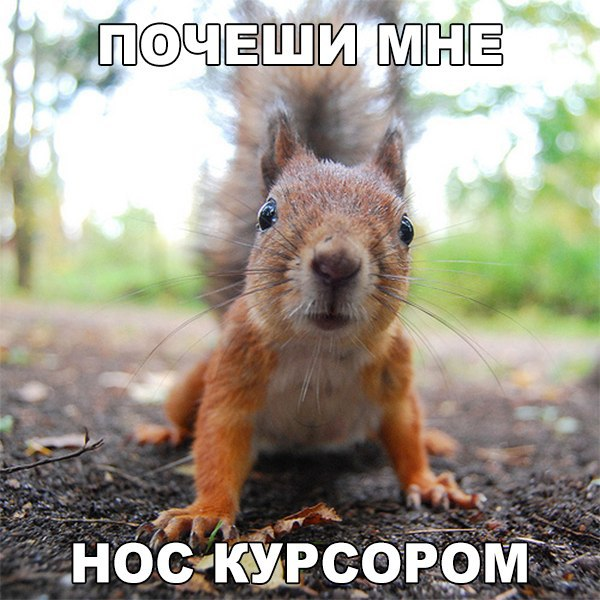 http://cs627224.vk.me/v627224416/2b315/ckCq8x1rXKw.jpg