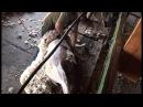 Стрижка овец Скоростные стригали Калмыкии VOB