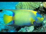 Самые красивые рыбы мира