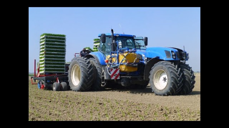 Planting Celeriac | New Holland T7.270 Trike / Ferrari Multipla 12-rij | Knolselderij planten