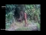 Загадочные существа снятые на видео