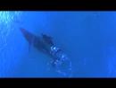 Мама-кит и мама-дельфин вместе выгуливают своих малышей ) Боже, они прямо как люди