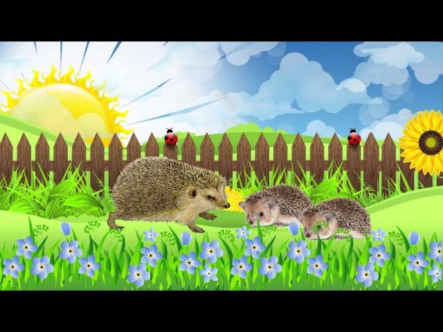 Животные и их детеныши Развивающий музыкальный мультфильм для малышей Animals and k