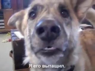 Разговор с собакой Говорящие животные Очень смешно Прикол
