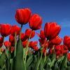ФАВОРИТ - товары для флористов, декораторов