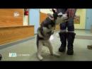Доктор Ди: ветеринар Аляски