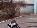 коты ебутся :D