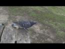 Дима и голуби)