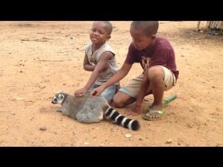 Лемур хочет, чтобы дети не прекращали его гладить / A lemur demand to be petted by kids