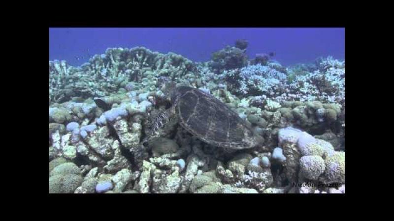 Обычный день красноморской черепахи