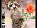 Кот - Поздравление женщине с Днём Рождения!