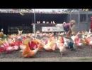 Paradise Park Koh Samui *video Grigory Mashtalir