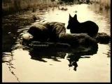 Дмитрий Ольшанский и Лидия Стародубцева. Психоанализ и кинематограф 2011