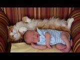 Katzen Treffen Neugeborene zum ersten mal Videoerstellung 2014 NEU HD