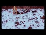 АNДРЕИЧ - Гляди пешком (cover ДДТ). Прогулка с карельской лайкой