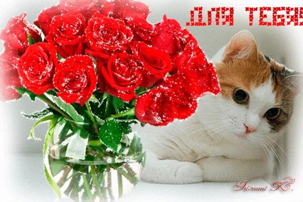 http://cs627228.vk.me/v627228209/7c53/qgcFoTVnal4.jpg