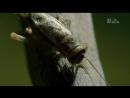 Animal planet Дикие животные Самые ядовитые