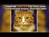 Один из трех известнейших котов Эрмитажа ищет дом на очередной раздаче в Петербурге