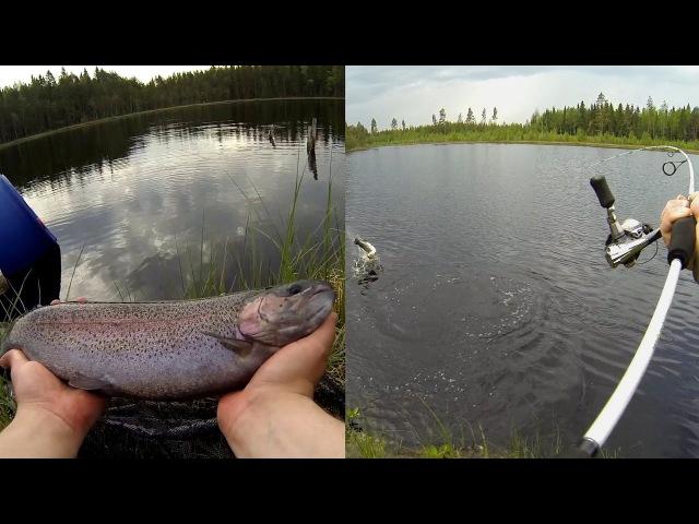 Kirjolohen kalastusta lammella