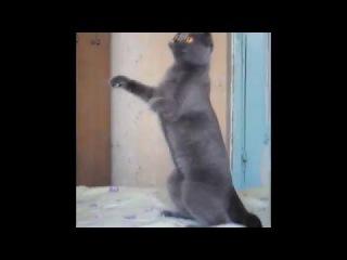 Прикольный кот качает под музыку