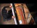 Lang Lang plays Beethoven's Sonata Appassionata Op. 57 No. 23 3rd Movement (Vienna)