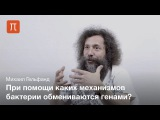 Горизонтальный перенос генов — Михаил Гельфанд
