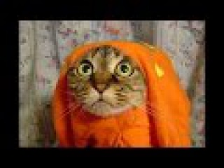 Кошачьи игры. Приколы с животными
