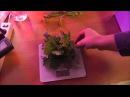 Тест LED (светодиоды) & ДНаТ. Взвешивание урожая. Тест фитоламп на салате в гидропонике.