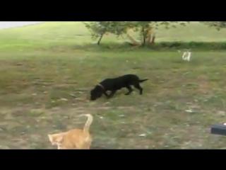 Кошки учатся жить с собаками