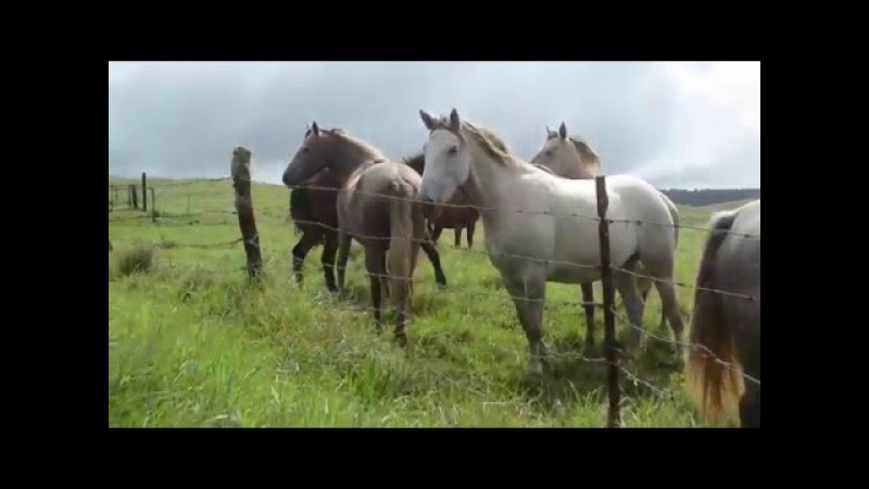 Government UFO ACTIVITY RANCH FARMERS REACT WHY NOW Astounding UFO VIDEO 2016
