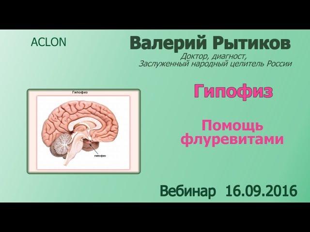 Гипофиз гипоталамус и эпифиз Роль Флуревитов
