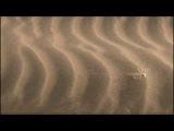 Rolling Sahara spider