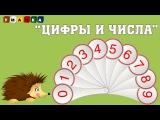 Цифры и Числа - Развивающий мультфильм - Ёжик Жека объясняет различие.
