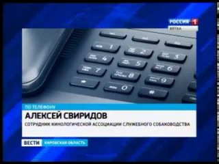 В Нововятске от клыков бездомных собак пострадал ребенок (ГТРК Вятка)