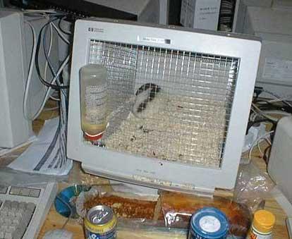 Монитор - клетка для хомяка