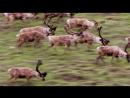Путешествие на край света с Артом Вольфом 6 серия Аляска Национальный арктический заповедник