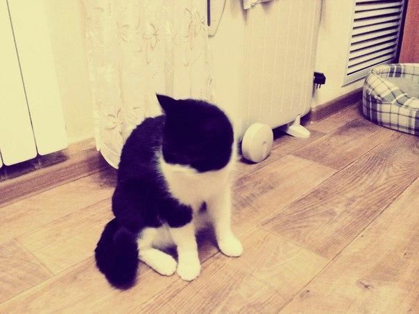 Просили показать кошку, вот. Зовут Мася с: