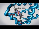 What is a Protein Learn about the 3D shape and function of macromolecules