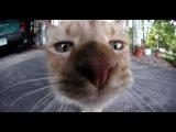 Самое смешное видео про котов. Приколы с кошками до слез