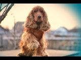 #25 Хочу собаку