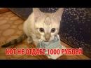 Кот не отдает 1000 рублей