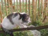 Кот говорит - НЕ ЗНАЮ
